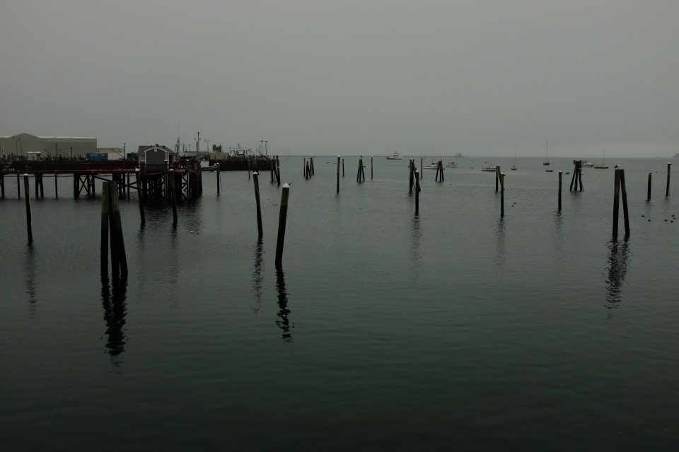 Rockland Harbor in fog, mid-October