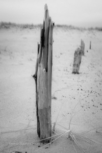 Hardings Beach, Cape Cod; image scored 14 of 15 pts in Camera Rochester juried competition